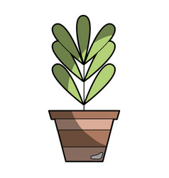 plant with leaves inside flowerpot design vector image