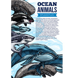 Whale and shark ocean animal sketch poster vector