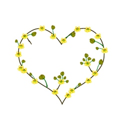 Yellow cassod flowers in a heart shape vector