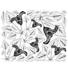 Hand drawn of water caltrop plant on white backgro vector