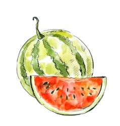 picture of watermelon vector image vector image
