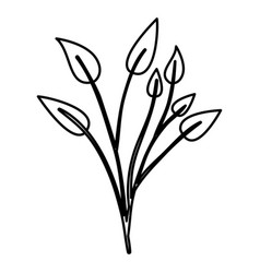 Sketch contour of branches with leaves plant vector