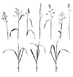 Wild cereal plants vector