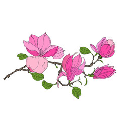 Branch with magnolia flowers vector