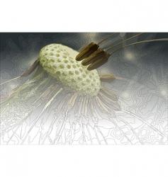 dandelion abstraction vector image vector image