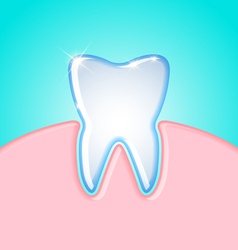 Tooth in gum vector image vector image