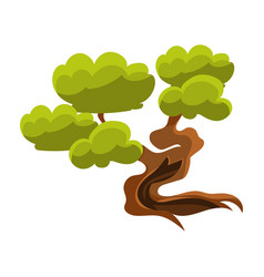 Green old tree bonsai miniature traditional vector
