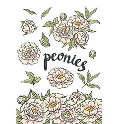 Floral collection of hand drawn pink peonies vector