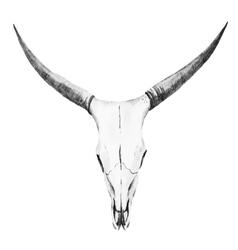 Bull skull watercolor vector