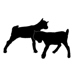 Goats romping vector