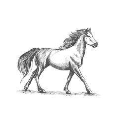 White horse walks gracefully vector
