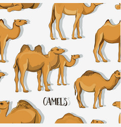 Camel silhouettes set pattern vector