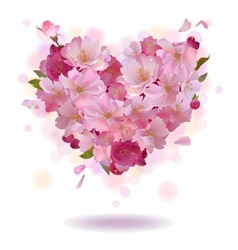 Cherry petal heart isolated on the white vector image vector image