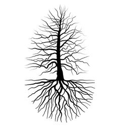 The tree and root vector