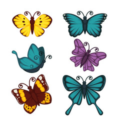 Amazing butterflies with unusual patterns on wings vector