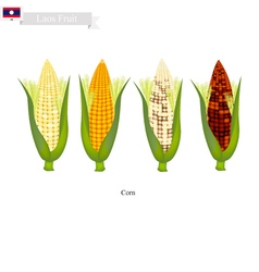 Fresh corn a famous fruit in laos vector