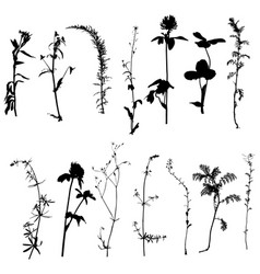wild plants silhouettes vector image vector image