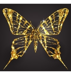 Butterfly multicolor logo vector