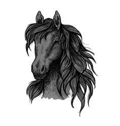 Black horse head sketch portrait vector