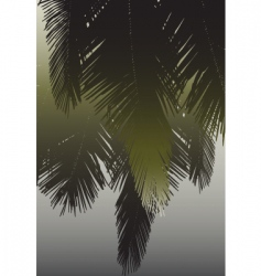 coconut fronds vector image