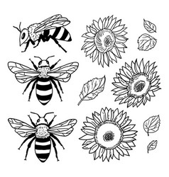 set with bees and sunflowers hand drawn vector image