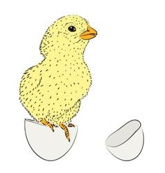 Newborn chicken vector image