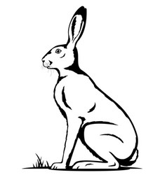 one hare black and white vector image vector image