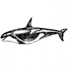 risso dolphin vector image vector image