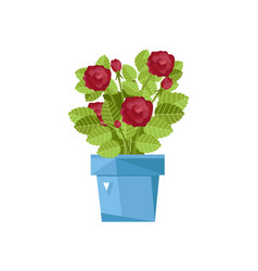 spring flower in pot isolated icon vector image vector image