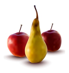 apples and pear vector image