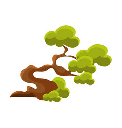 Green crooked tree bonsai miniature traditional vector