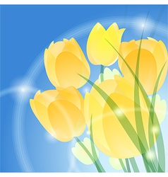 Yellow tulips vector image vector image