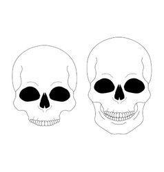 Contour lines skull vector image vector image