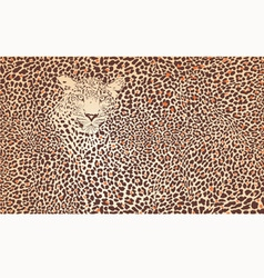 Pattern background leopard vector