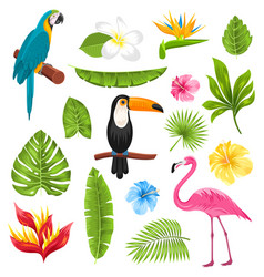Set tropical flowers exotic birds and plants vector