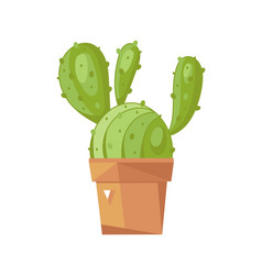 cactus in pot isolated icon vector image