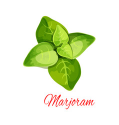 marjoram or oregano spice herb cartoon icon vector image vector image