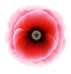 Red poppy flower vector
