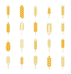 Set of simple wheat ears icons vector