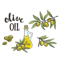 Bottle with olive oil isolated objects hand drawn vector