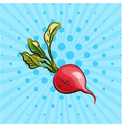 ripe radish with a green tail on a blue background vector image vector image