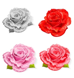 rose2 vector image