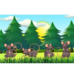 Four rats in the field vector image vector image
