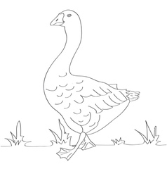 Goose black and white vector