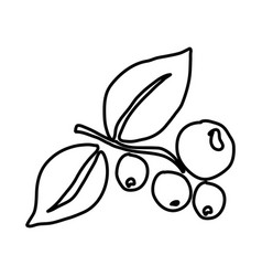 Monochrome contour hand drawn with coffee tree vector