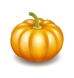 Orange autumn pumpkin icon vector