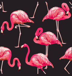 tropical bird flamingo background vector image vector image