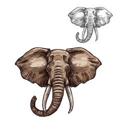 Elephant isolated sketch of african mammal animal vector