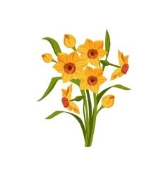 Daffodil hand drawn realistic vector