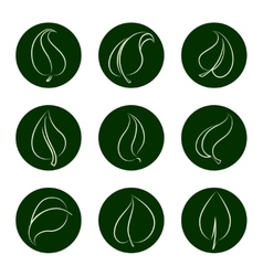 Outline leaves icons on green backgrop vector image vector image